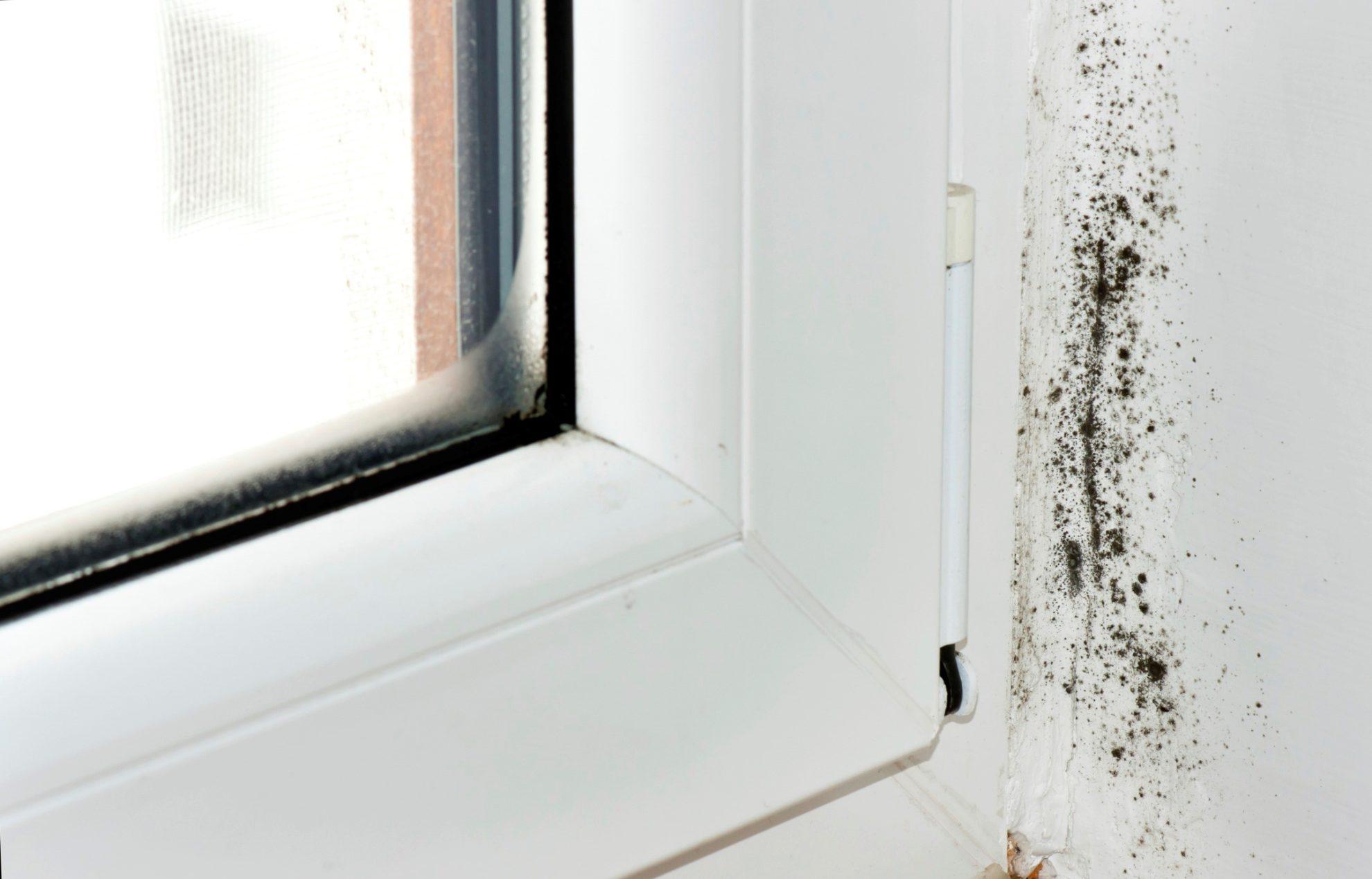plesen na oknah kak borotsya 01 2 Ялта окна VEKA - изготовление и установка окон и дверей